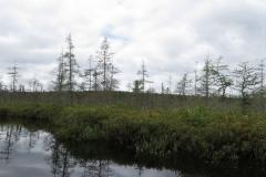 Ink Lake Wetland, Algonquin Park