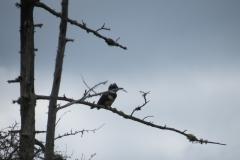 Bird on Ink Lake Wetland, Algonquin Park